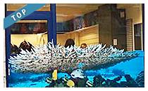 Magasin de plongée sous marine